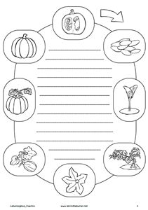 Der Herbst naht | Lebenszyklen, Kürbis und Lehrmittel