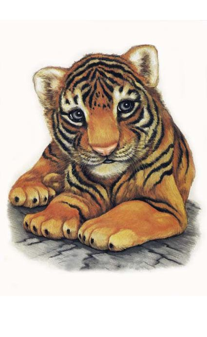 Картинки тигрята милые нарисованные, открытки для