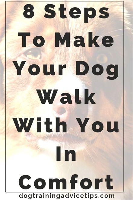 Dog Training Denver Instinct Dog Training Nyc Dog Training