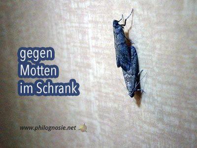 Mottenschutz Kleidung Im Schrank Gegen Motten Schutzen Mottenschutz Motten Im Schrank Und Motten Kleidung