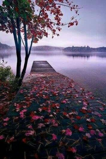 Lonely But Beautiful Nature Nature Photography Beautiful Landscapes