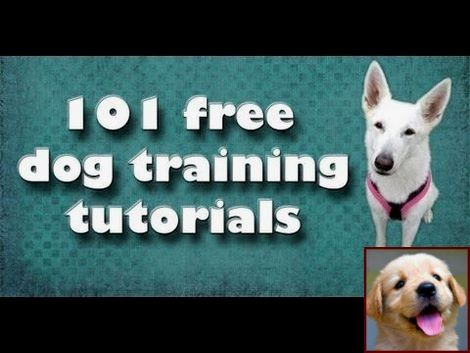 Dog Behavior Muzzle Punch And Clicker Training For Dogs Petsmart