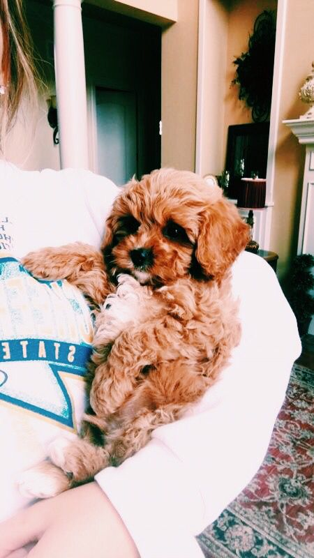 Pin By Kristen Camille Mimms On Doggo Cute Baby Animals Cute