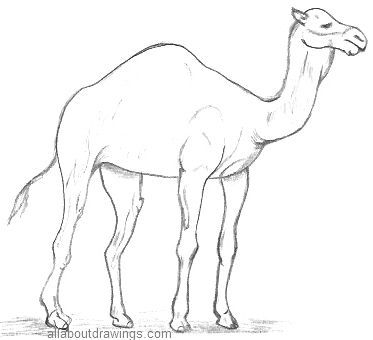 List Of Pinterest Camel Drawing Easy Images Camel Drawing Easy