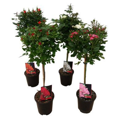 Roza Mix 90 100 Cm Roze W Atrakcyjnej Cenie W Sklepach Leroy Merlin Christmas Ornaments Novelty Christmas Holiday Decor