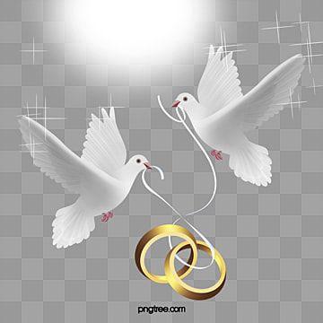 ناقلات خاتم الزواج عالية الدقة جميلة حمامة Png وملف Psd للتحميل مجانا Wedding Frames Wedding Ring Graphic Wedding Ring Vector