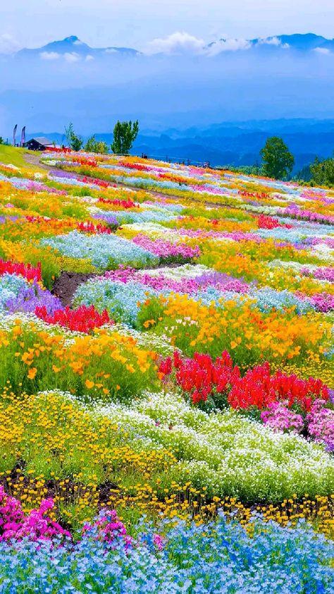 Beautiful Photos Of Nature, Beautiful Flowers Garden, Amazing Nature, Beautiful World, Beautiful Gardens, Amazing Flowers, Landscape Photos, Landscape Photography, Nature Photography