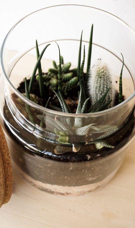 Ein Garten Im Glas Pflanzen Garten Blumenerde