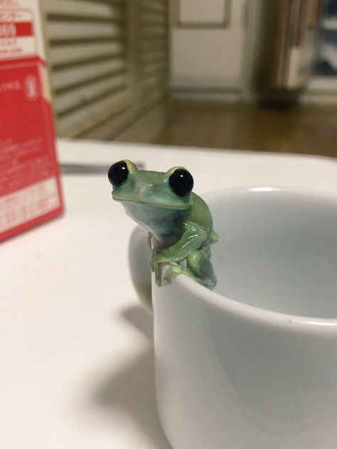 "cute-pet-animals-aww: ""Cute little frog 🐸 "" Frog Pictures, Baby Animals Pictures, Cute Animal Photos, Animals And Pets, Strange Animals, Strange Pets, Frog Pics, Happy Animals, Baby Animals Super Cute"