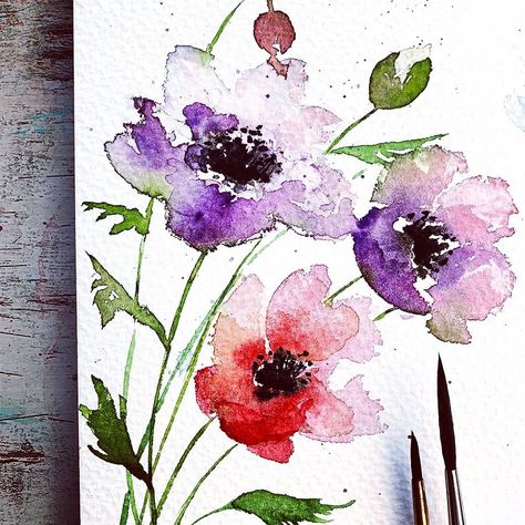 A Watercolor Sketch Of Three Poppies In Pink Violet