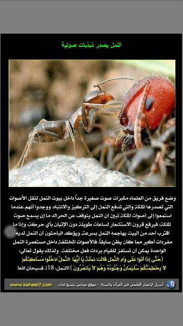 النمل يصدر ذبذبات صوتيه Arabi Pandora Screenshot Pandora