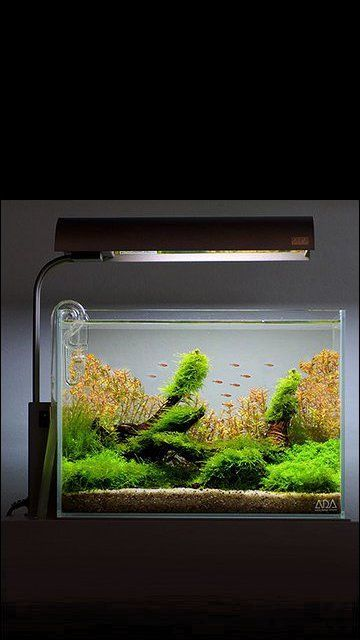 21 Best Aquascaping Design Ideas To Decor Your Aquarium Tips Inside Decoration Design