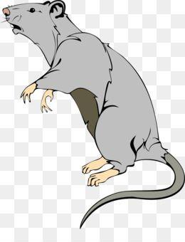Rat Mouse Png Rat Mouse Transparent Clipart Free Download Laboratory Rat Mouse Clip Art Mouse Abacus Facebook Art Art Brown Rat