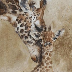 Set of Five Museum Framed Wild Animal Lithograph Prints