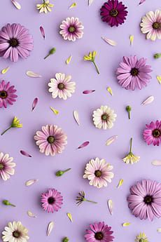 Purple flower background by Ruth Black for Stocksy United