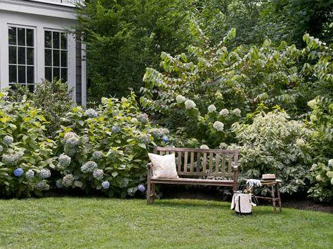 Hydrangeas and dogwoods backed by doublefile viburnum make a showy border year-round. | Photo: John Gruen