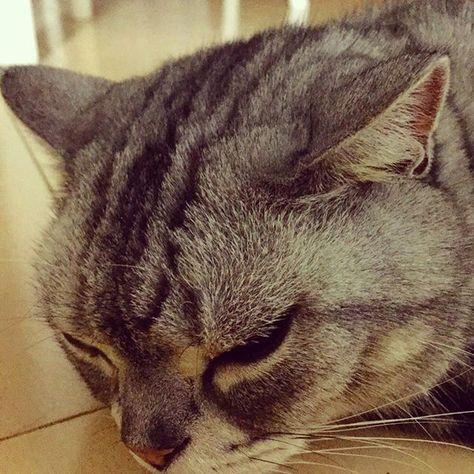 "☁️おはよう!今朝の神戸元町は曇り!すっかり🌾秋!深夜に☔️💦雨降りだった模様!こちらはだるそうな""コフク""どん!😾Σ👟行ってきます!(^_^) #神戸 #神戸元町 #kobecity #神戸みなと元町 #愛猫 #猫 #ネコ #ねこ #寝子 #寝仔 #neko #cat #スコティッシュフォールド #scottishfold #コフク #赤鼻 #だるい #dull #優しいコ #秋雨前線 #お盆 #終戦記念日 #8月15日 #iphone撮影"