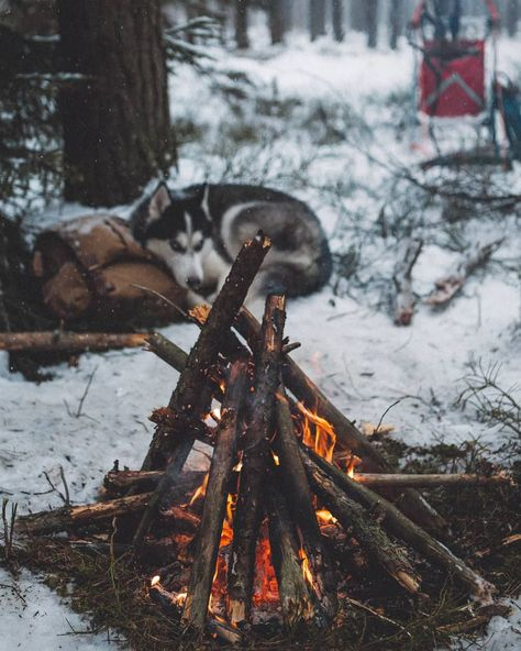 ❄️what's better than camping? camping with dogs!❄️ . . . . . . . tags #cozy #home #fall #love #interiordesign #design #coffee #comfy #christmas #cute #decor #warm #fashion #instagood #style #happy #travel #summer #dogsofinstagram #homedecor #inspiration #photography #beautiful #sweaterweather #winter #interior #photooftheday #homesweethome #luxury #hygge