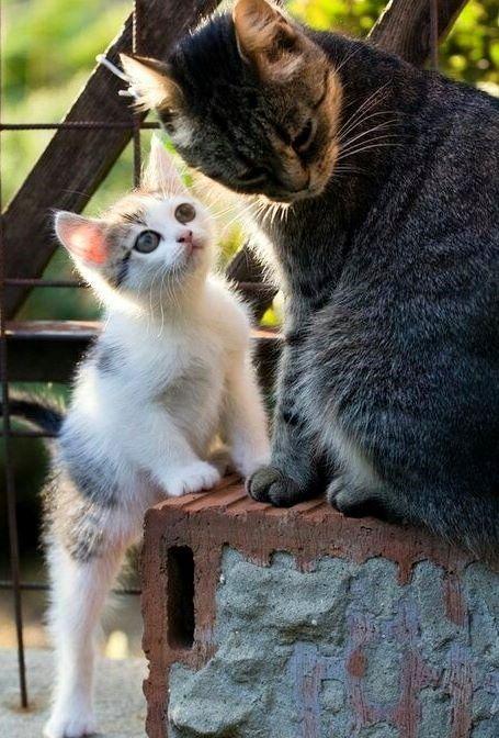 Imagen De Antoniaromero En Gatito Bonito Gatos Bonitos Gatos Mascotas