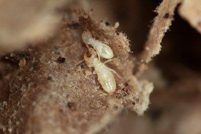 Orkin Pest Control Lanza Lista Inaugural De Las 50 Principales Ciudades De Termitas En Estados Unidos Virginia Occidental Charleston Carolina Del Sur Canalones