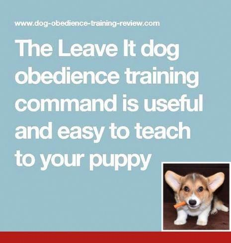 Teach Your Dog To Jog With You Dogtraining And Dogcare Good