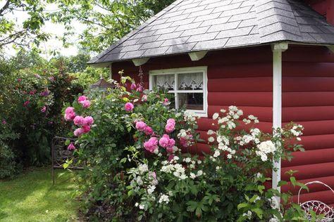 Pin Auf Garden Ideas Garten Ideen