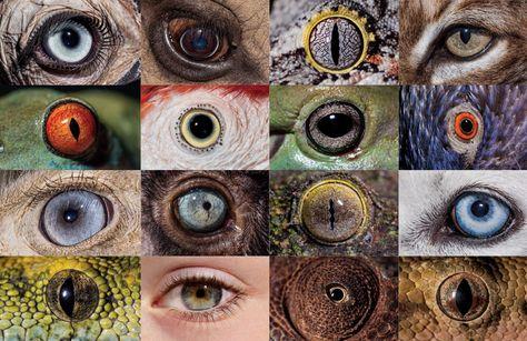 "Image result for nat geo animal eye quiz"""