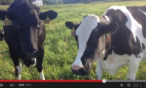 Love this video of the Conant Riverside Farm on a beautiful September Sunday <3 #farmlove #conantssweetcorn #video #fall