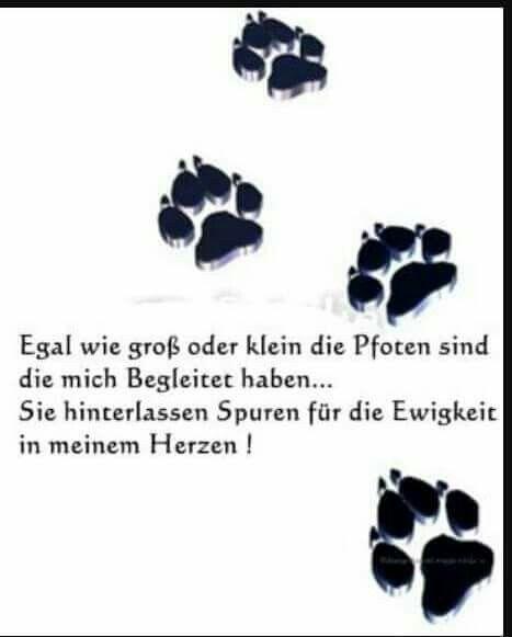 Mehrmehr Spruche Tiere Hunde Gedichte Hund Zitat