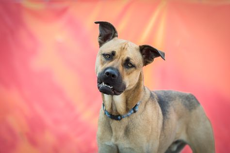 Dogs And Cat Photographer Etobicoke Humane Society Toronto