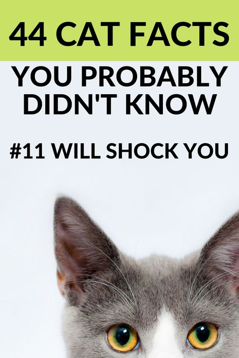 Crazy cat facts you probably didn't know! Read about why your favorite household pet is so special. You won't believe # 11. #catfacts #cats #cat #cutecats #interesting