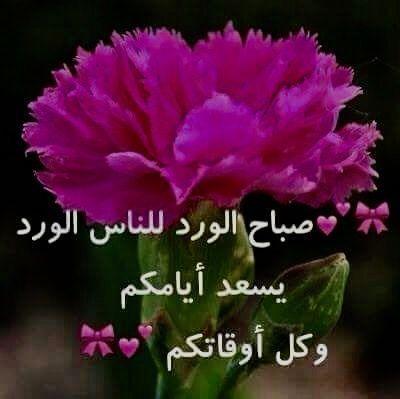 صباح الورد أجمل صور صباح الخير و أحلى مسجات الصباح Dianthus Caryophyllus Flowers Cool Words
