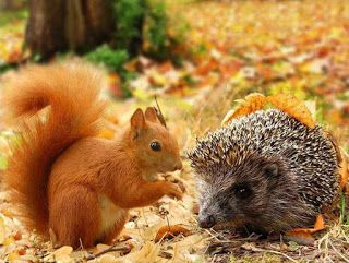 Hedgehog and squirrel in the autumn forest in 2020   Animal articles, Animal pictures, Squirrel