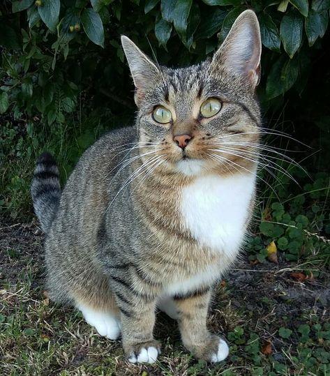 So u say it's #moosyamonday? And i got scolding for hunting? ?Swipe for my react... ,  #cat #cat_features #catliving #catlover #catlovers #catoftheday #catphoto #cats #cats_of_instagram #cats_of_world #catsagram #catslife #catsofig #catsofinstagram #catsoftheworld #catsoninstagram #catstagram #chat #chillithecat #gato #gatos #instacats #instagramcats #katzen #katzenbabys #kittycat #kot #moosyamonday? #outdoorcats #rescuedcat #SüßeKatzen #süßekatzen #süssekatzenfotos