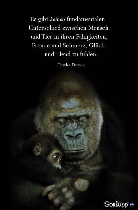 Es gibt keinen fundamentalen Unterschied zwischen Mensch und Tier - sweet bitter truth - #bitter #fundamentalen #gibt #keinen #Mensch #sweet #Tier #truth #und #Unterschied #zwischen