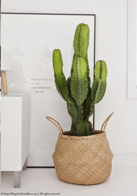Déco facile et pas chère: une plante dans un panier