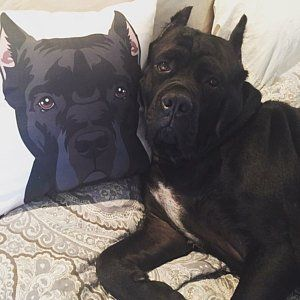 Cane Corso Pillow Dog Lover Gift Fiance Gift Stuffed Dog