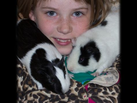 Meet the two newest members of my household: Silky and Bandit, and pair of guinea pigs.