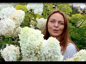 Kwitnace Byliny Nowe Odmiany Hortensji Bukietowej Na Wystawie Ogrodniczej Ogrod Bez Tajemnic Youtube Hydrangea Garden