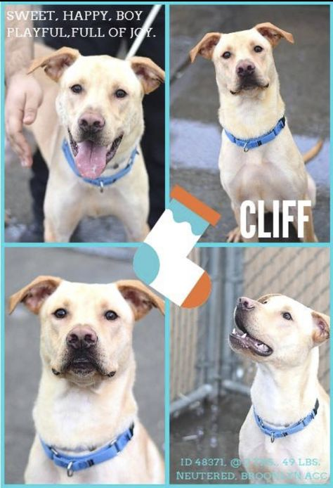 Safe Cliff Pulled By Pit Of Our Souls Rescue 12 06 18 To Die