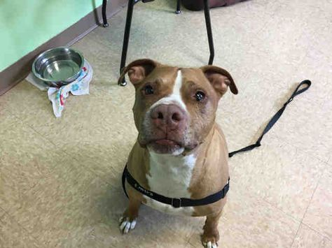 Pin On Dogs For Adoption