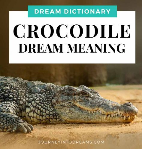 What Does It Mean To Dream Of An Alligator Or Crocodile While It Can Sometimes Be A Frightening Experience For Some Dream Meanings Dream Symbols Meant To Be