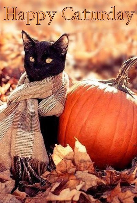 Image result for HAPPY AUTUMN CATURDAY