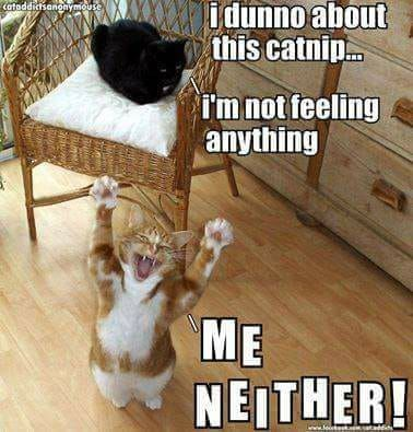 Pin By Maureen 2 On Fav Pix Crazy Cats Happy Cat Cats