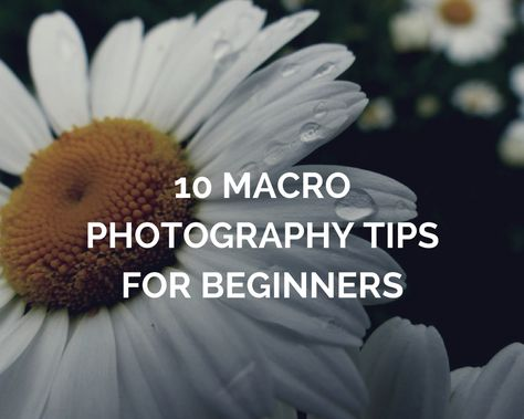 10 Macro Photography Tips for Beginners