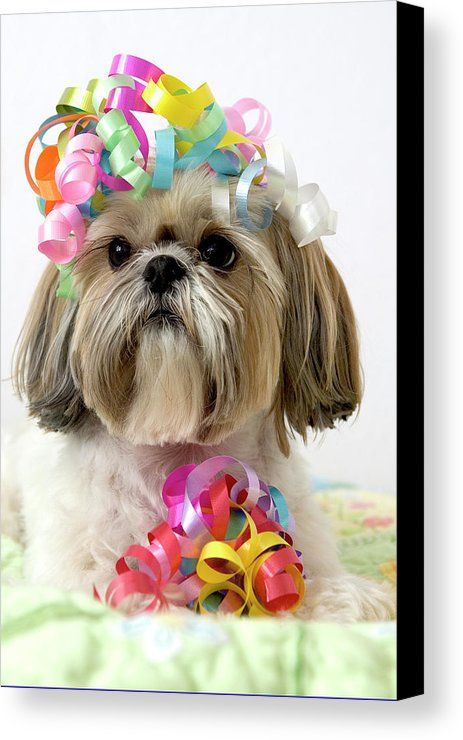 Vertical Canvas Print featuring the photograph Shih Tzu Dog by Geri Lavrov