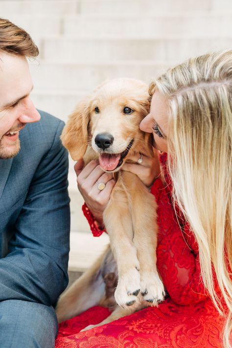Bay Area Dog Hikes Goldenretrieverpuppiesbayarea Puppies Golden