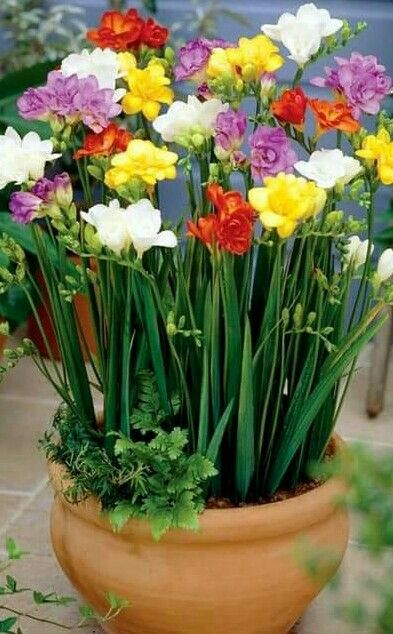 Pin On Planting Flowers