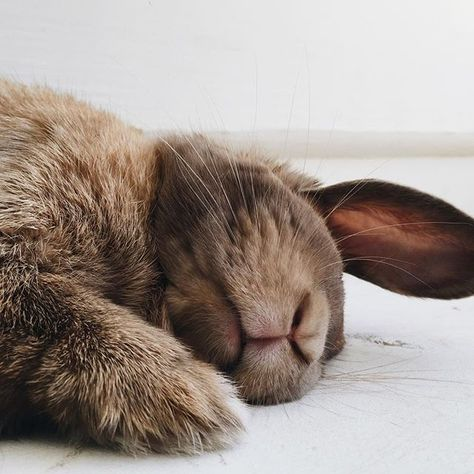 is it wrong to want to kiss this sweet little rabbit on its furry lips? I know, but it's so darn cuuuuute!!!!