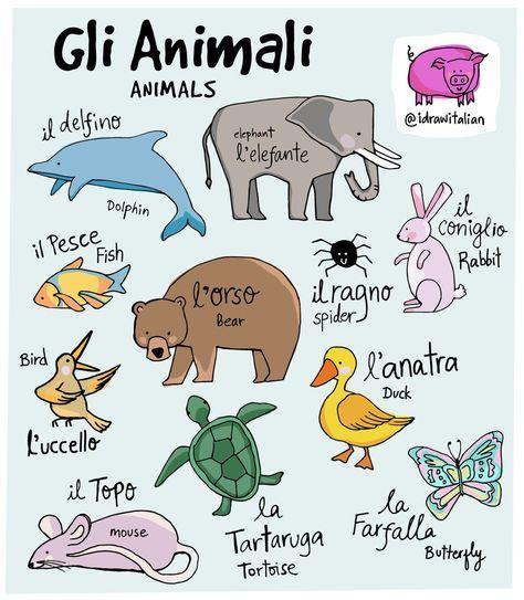 Gli animali #learnitalian #italy #iloveitaly #glianimali #italianlanguage #polyglotpic.twitter.com/GnW2KxXxWa
